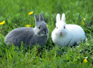 White and Gray Rabbits in Grass