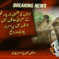 Camels Dead– Breaking News – Geo