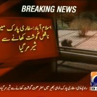 Lion Dead– Breaking News – Geo