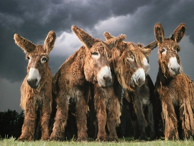 Donkey Group