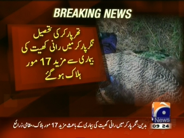 Tharparkar Peacock Died– Breaking News – Geo