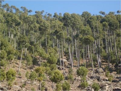Forest Pakistan
