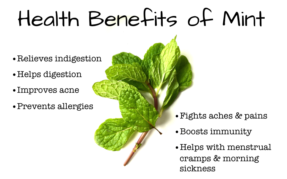 mint benefits weight loss in urdu