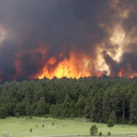 America Forest Fire