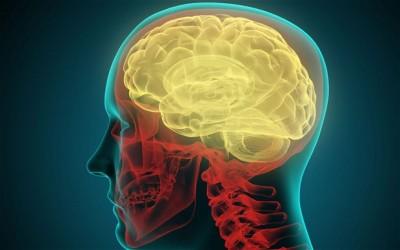 Human Brain Simulation