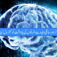 Human Brain View
