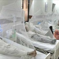 Dengue Patients