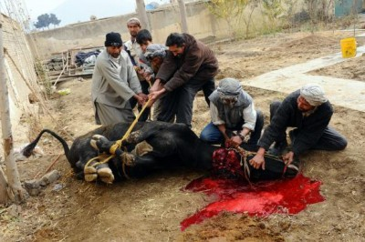 Eid al-Adha Sacrifice