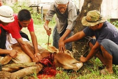 Eid ul Adha Animal Qurbani
