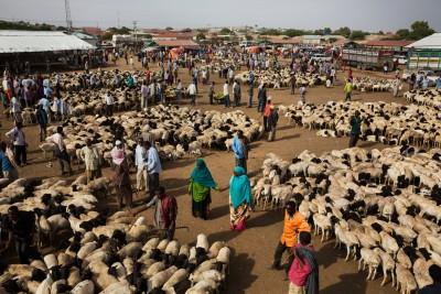 Goat Market
