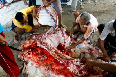 Slaughter of Animal