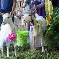 Animal Contest Beauty