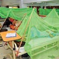 Dengue Virus Patients