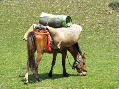 Horse Loaded