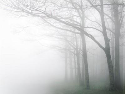 Dawn Fog