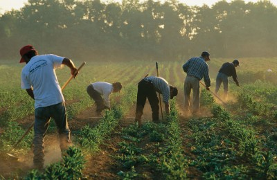 Immigrants Forced Labor