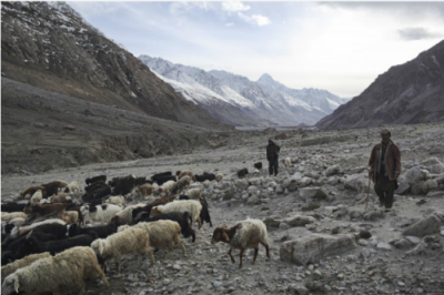 Afghanistan,Mountainous Areas, Cattle