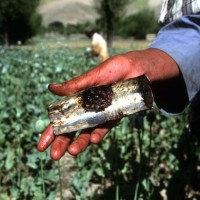 Drug Trafficking in Afghanistan