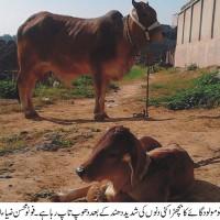 Gulyana News