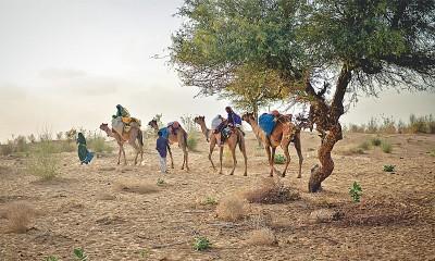 Tharparkar Drought