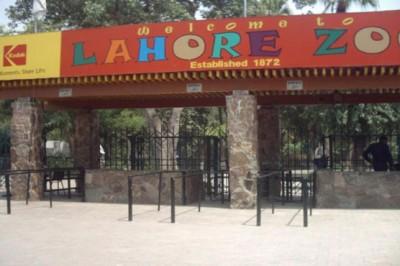 Close Lahore Zoo