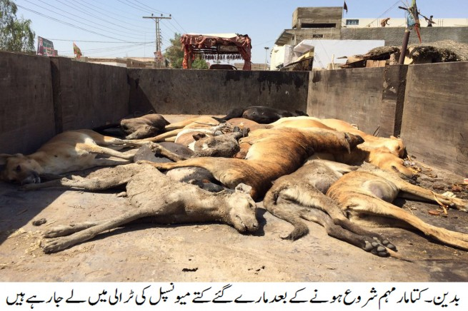 Dog Killing Campaigns