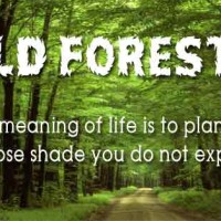 Forest's Day