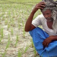 Farmers Suicides