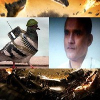 Pakistani pigeon Vs kulbhushan Yadav