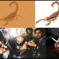 Scorpiondrug