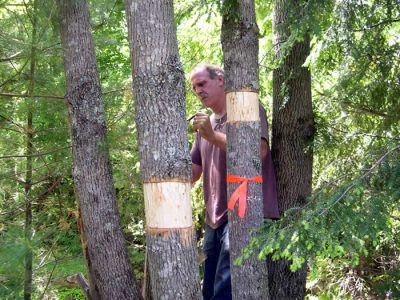 Effective Monitoring  Trees