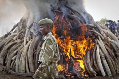 Elephant Ivory Burning