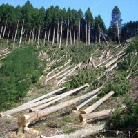 Forests Deforestation