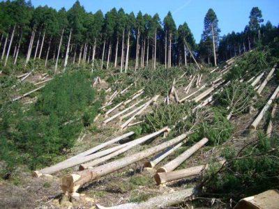 Forests Deforestation
