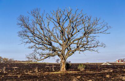 Shortage Trees