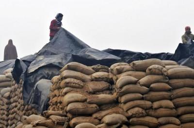 Wheat Stockholders