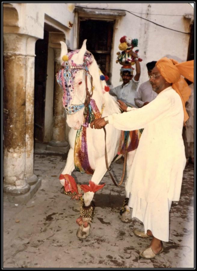 Sahibzada Ijaz Bukhari's Equine display