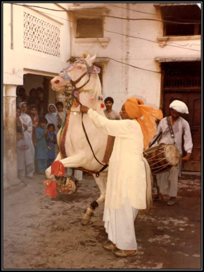 Sahibzada Ijaz Bukhari's Equestrio