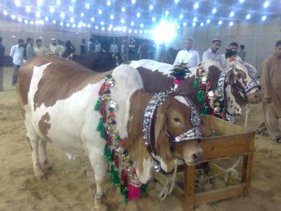 Eid al-Adha-Qurbani