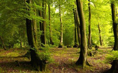 Faisalabad Forest