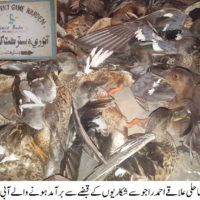 Badin Aquatic Birds