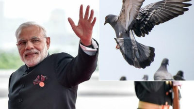 Modi Modi and Pigeon