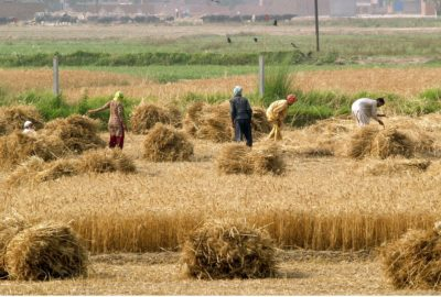 Agriculture in Pakistan