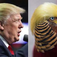 Donald Trump and Bird