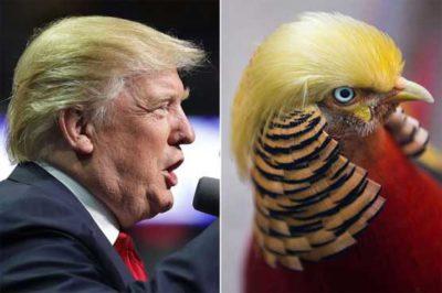 Donald Trump and Bird