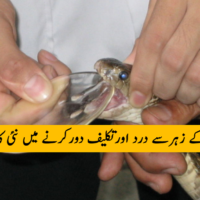 Snakes Poison
