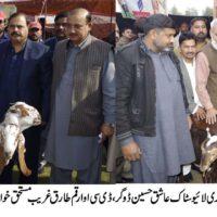 Sheep Distribution