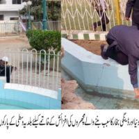 Rehan Hashmi Insert Fish