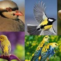International Migratory Birds Day