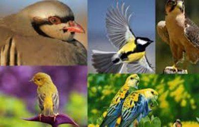 International Migratory Birds Day